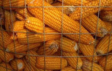 圈玉米网,绿色围网